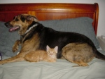 cat-and-dog family members